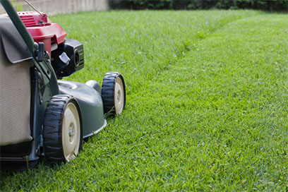 Service of grown care by Professional landscaping services