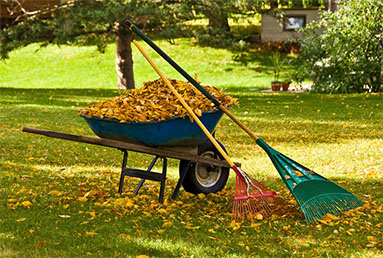 Spring and fall cleanup by Professional landscaping services